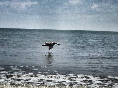 Seagull, Ocean, Seabrook Island